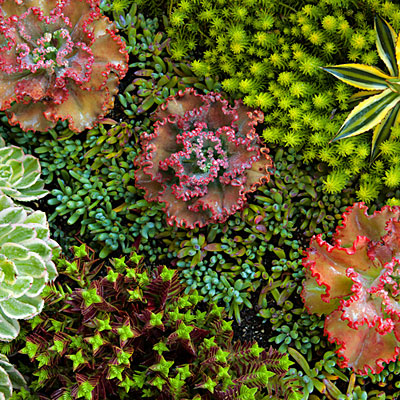 Beachside succulent garden; Sep'12; Tide pool beach garden n Corona Del Mar